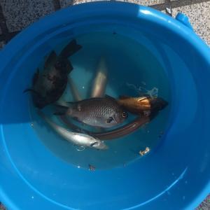 R1/7/31(水) 夏期講習『釣り』