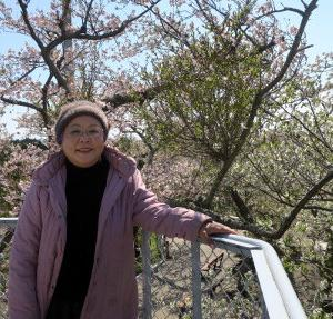 桜満開です。島田市牧之原公園