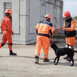 REDOG救助犬育成トレーニング