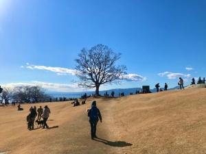 吾妻山公園に行ってきました。
