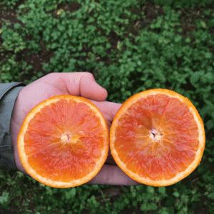 農家と直接つながる Crowdfarming