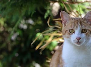 猫さんの緑地も少しだけ紅葉