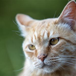 数か月ぶりに猫の緑地を訪れる