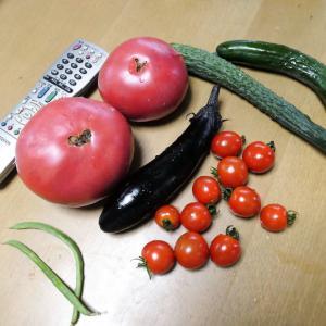 大物トマトが採れたけど、食べられない