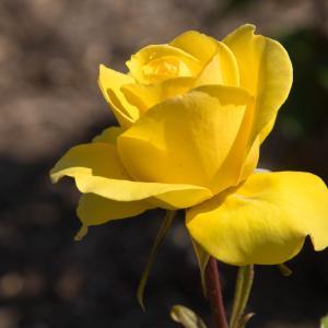 俳句のチカラ15:気遣い力