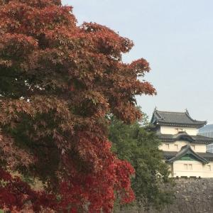 皇居乾通りの紅葉を見てきました