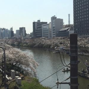 お花見(外濠公園~目黒川完結編?)
