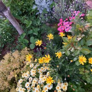 ●花が好き、一日がかりの庭いじりで筋肉痛・・・