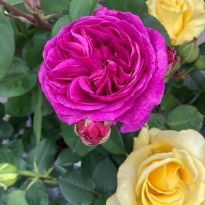 ●5月9日は巳の日・金運UPの最適日(お得情報アリ)