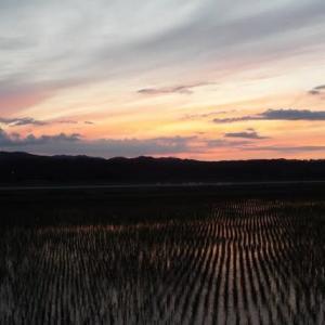 またまた夕焼、そして畑の様子