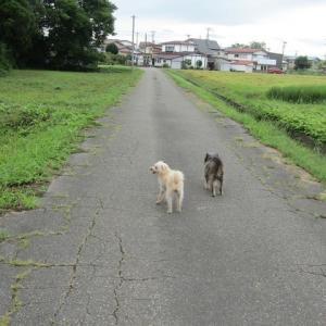 散歩とルリシジミ