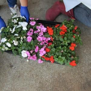 花植えボランテア