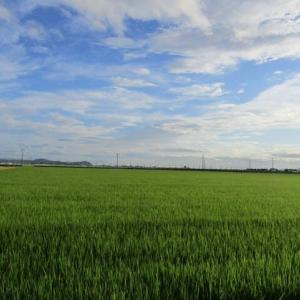 田んぼ道の散歩