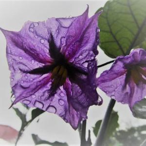 雨が滴るきれいな野菜