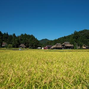 黄金色の稲と茅葺