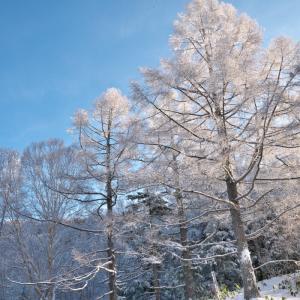 志賀高原 朝の樹木