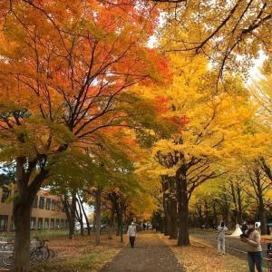 北海道はいま紅葉どき