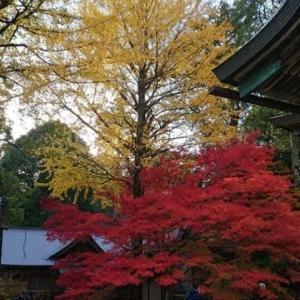 ジェラート醍醐桜in真庭