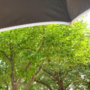 暑い‥ので日傘は必須ですね!