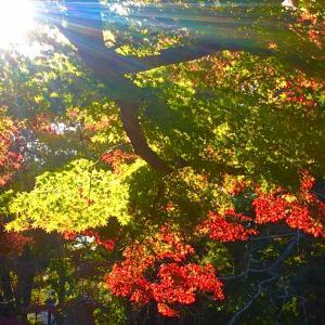 秋晴れがまぶしい