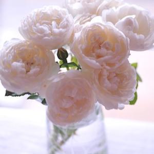 春を夢見て - 窓辺の薔薇