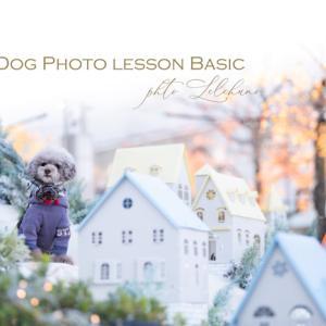 残1【DOG初級マニュアルスタートクラス】木曜日クラス