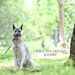 ライフスタイルと犬との暮らし