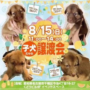 """""""8/15(日) 子犬の譲渡会を今池で開催します!"""""""