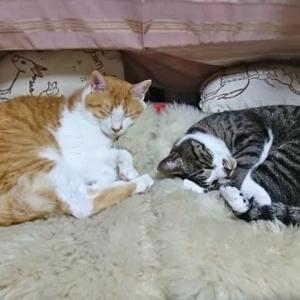 6月14日(日) ~猫の麦とごまの日常日記~