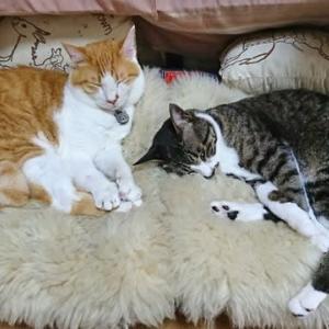 6月16日(火) ~猫の麦とごまの日常日記~