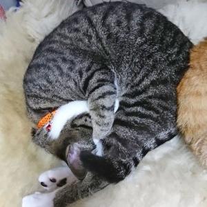 7月10日(金) ~猫の麦とごまの日常日記~