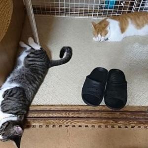 8月2日(日) ~猫の麦とごまの日常日記~