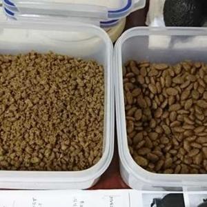 8月31日(月) ~猫の麦とごまの日常日記~
