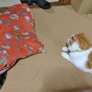 9月6日(日) ~猫の麦とごまの日常日記~
