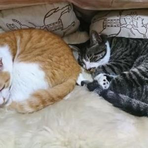 9月11日(金) ~猫の麦とごまの日常日記~