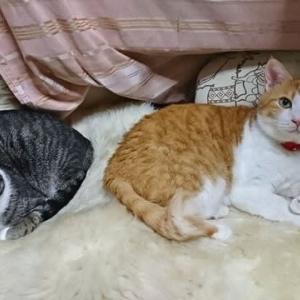 9月24日(木) ~猫の麦とごまの日常日記~