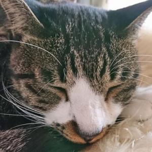 9月28日(月) ~猫の麦とごまの日常日記~