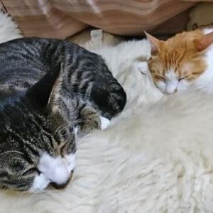 ~猫の麦とごまの日常日記~