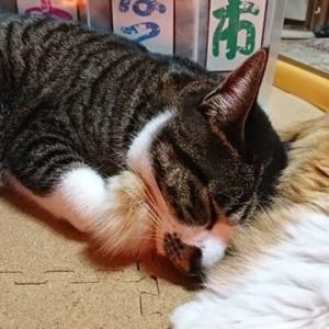 1月16日(土) ~猫の麦とごまの日常日記~