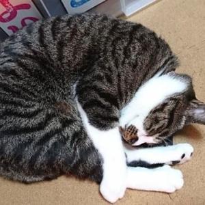 1月20日(水) ~猫の麦とごまの日常日記~