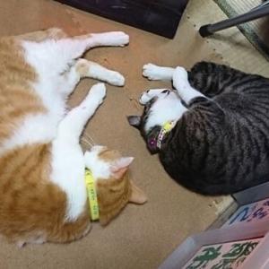 2月25日(木) ~猫の麦とごまの日常日記~