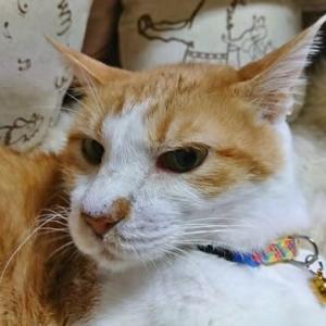 6月14日(月)  猫の麦とごまの日常日記