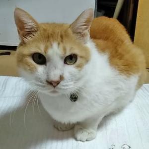 9月17日(金)  猫の麦とごまの日常日記