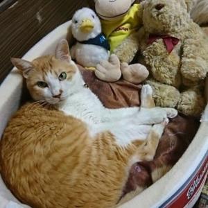 9月21日(火)  猫の麦とごまの日常日記