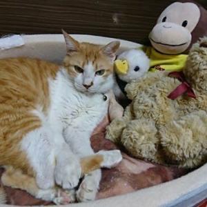 9月26日(日)  猫の麦とごまの日常日記