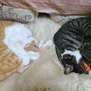 10月20日(水) 猫の麦とごまの日常日記
