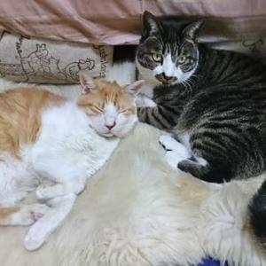 10月27日(水)  猫の麦とごまの日常日記
