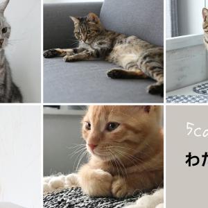 【ご報告】猫家族が増えました♪