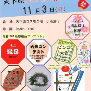 11/3 加古川ウェルネスパークコスモス祭