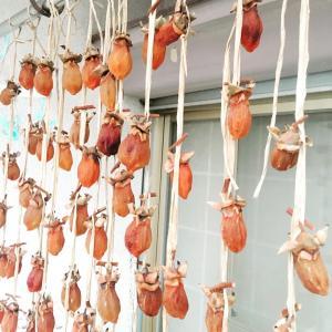 続 柿のカーテン